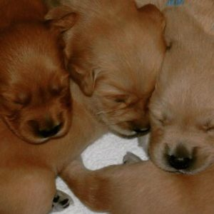 Three puppies snuggled up together