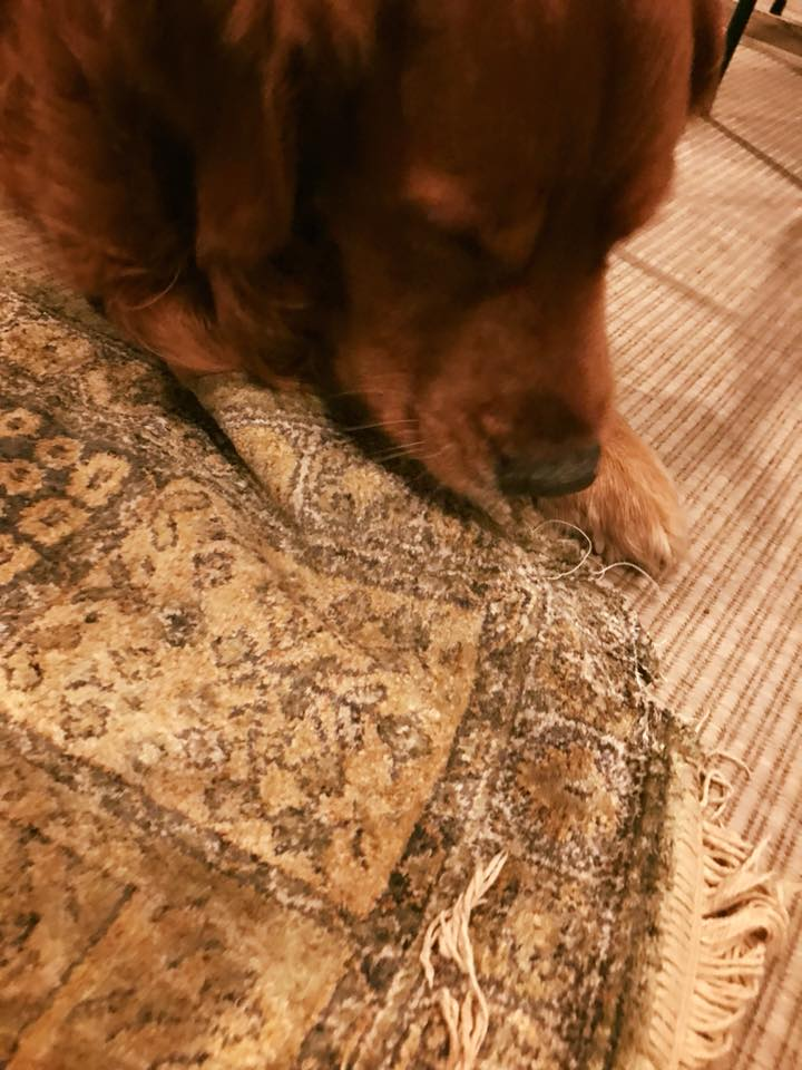 Bean working on rug design