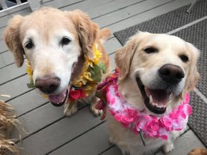 Trooper & Q wearing flower leis and smiling
